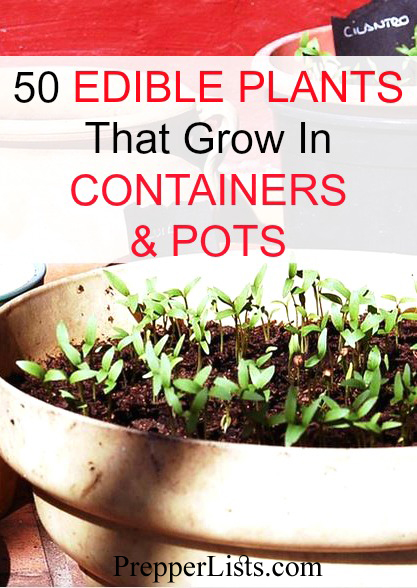 50 Edible Plants You Can Grow In Containers And Pots