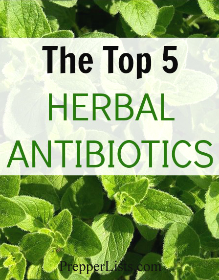 The Top 5 Herbal Antibiotics