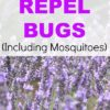 Plants That Repel Bugs, Including Mosquitoes
